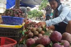Lào Cai giải bài toán tiêu thụ nông sản giữa bão dịch COVID-19