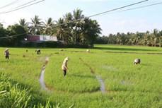 Trà Vinh phát triển nông nghiệp theo thế mạnh 4 tiểu vùng