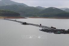 Yên Bái: Chính sách chi trả dịch vụ môi trường rừng tạo nguồn sinh kế ổn định, lâu dài