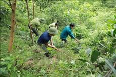 Phú Thọ chú trọng phát triển kinh tế rừng bền vững