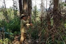 Hiệu quả từ chính sách chi trả dịch vụ môi trường rừng ở Kon Tum