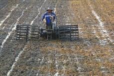 Trà Vinh: Khuyến cáo nông dân tuân thủ lịch thời vụ xuống giống né hạn mặn
