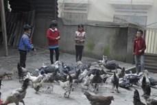Lào Cai dồn lực cho giáo dục vùng cao