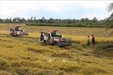 Xây dựng và phát triển bộ giống lúa mang thương hiệu giống Vĩnh Long