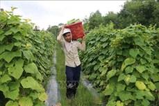 Trà Vinh tiếp tục chuyển đổi 1.550 ha đất sản xuất kém hiệu quả