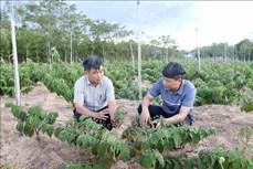 Huyện Cam Lộ ứng dụng khoa học phát triển sản phẩm OCOP dược liệu