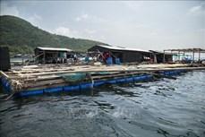 Kiên Giang khuyến khích đầu tư phát triển nuôi biển
