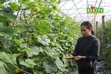 Đắk Nông định hướng phát triển kinh tế hợp tác xã ứng dụng công nghệ cao
