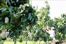 An Giang sẽ chuyển trên 34.000 ha đất lúa kém hiệu quả sang rau, màu và cây ăn trái