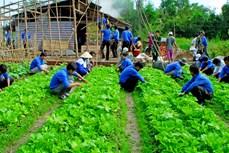 Bạc Liêu thu hút trí thức trẻ tình nguyện tham gia phát triển nông thôn