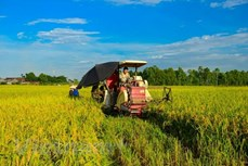 越南经济75周年发展历程:农业是支撑国民经济发展的基础产业