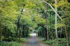 越南力争林业产值年均增速达5至5.5%