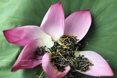 河内人热衷于莲花茶窨制业,竭尽全力保护与弘扬先祖传统