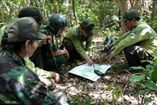 """Theo chân """"biệt đội phá bẫy"""", cứu thú tại Khu bảo tồn thiên nhiên Sơn Trà"""
