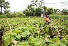 Huyện miền núi Tam Đảo thực hiện đồng bộ nhiều giải pháp, hướng tới giảm nghèo bền vững
