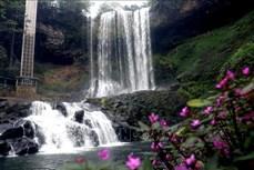 Ngỡ ngàng trước vẻ đẹp hoang sơ của thác Đambri