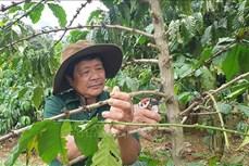 Ông Phạm Văn Xây góp phần thay đổi nếp nghĩ, cách làm kinh tế trong đồng bào dân tộc thiểu số ở Kbang