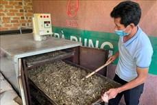 Nông dân miền núi Vân Canh phát triển kinh tế từ sản phẩm đặc trưng địa phương