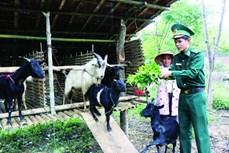 Bộ đội biên phòng A Lưới đồng hành với người dân phát triển kinh tế