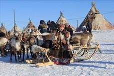 Rực rỡ sắc màu Lễ hội người chăn hươu phương Bắc Nga