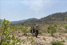 Giữ màu xanh cho những cánh rừng giáp ranh ở Chư Pưh, Gia Lai