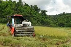 Bình Phước: Người dân vùng sâu được hỗ trợ thu hoạch lúa giữa mùa dịch
