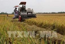 Liên kết sản xuất và tiêu thụ giúp tăng lợi nhuận từ 3 - 4 triệu đồng/ha/vụ lúa
