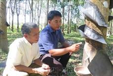 Kon Tum phát triển kinh tế - xã hội vùng dân tộc thiểu số rất ít người