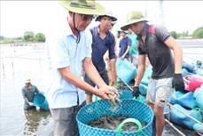 Lê Văn Sấm - Tỷ phú nuôi tôm công nghệ cao ở vùng biển mặn