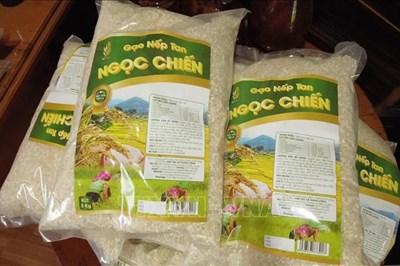 Nâng tầm thương hiệu gạo nếp tan Ngọc Chiến