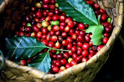 Đắk Lắk dừng tổ chức Lễ hội cà phê Buôn Ma Thuột năm 2021