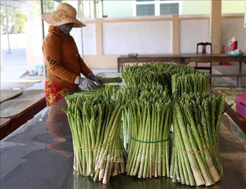 Ninh Thuan tieu chuan hoa cac san pham dac thu hinh anh 3