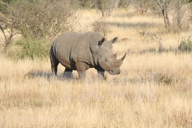 越南播放《明天,我会长大》短片 呼吁制止犀牛偷猎 hinh anh 1