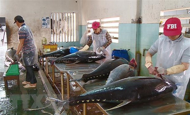 越南金枪鱼出口增长3到4倍 hinh anh 1