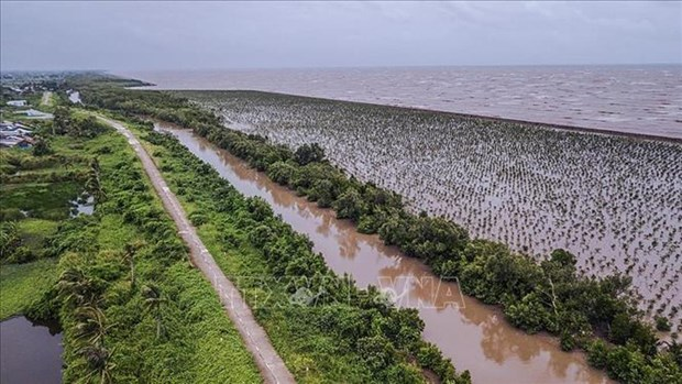 推动九龙江三角洲地区可持续发展和适应气候变化 hinh anh 1