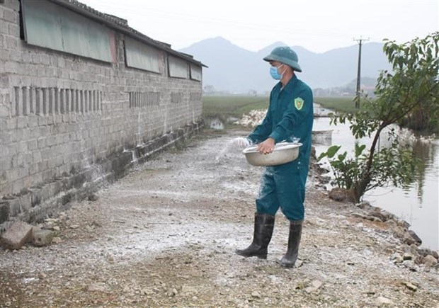 越南政府总理要求强化禽流感疫情防控措施 hinh anh 1