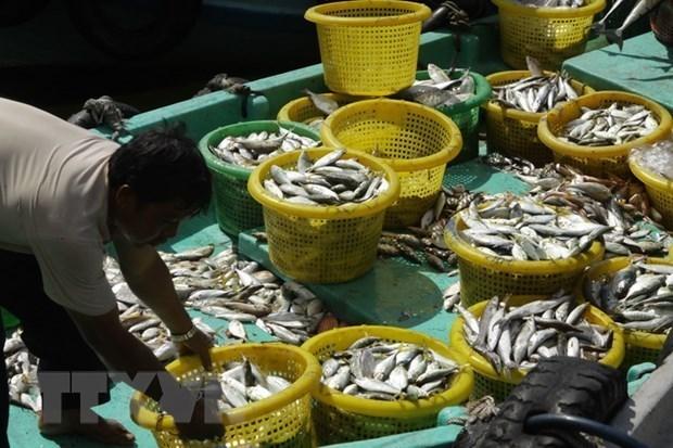 坚江省募集近12.7万亿越盾用于发展海水养殖业 hinh anh 1