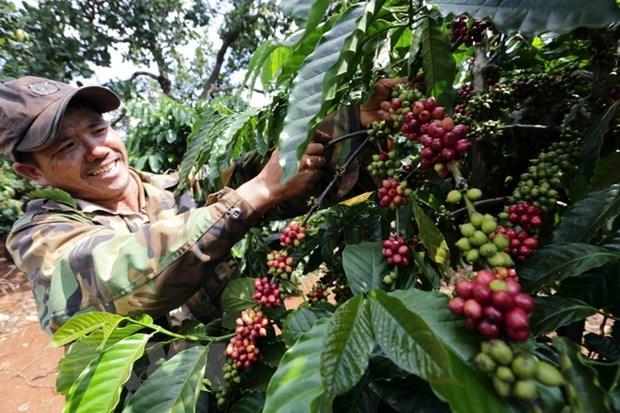 2021年第一季度越南农林水产品出口额增长近20% hinh anh 1