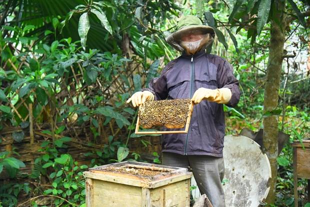 和平市独立乡注重发展养蜂业 hinh anh 1