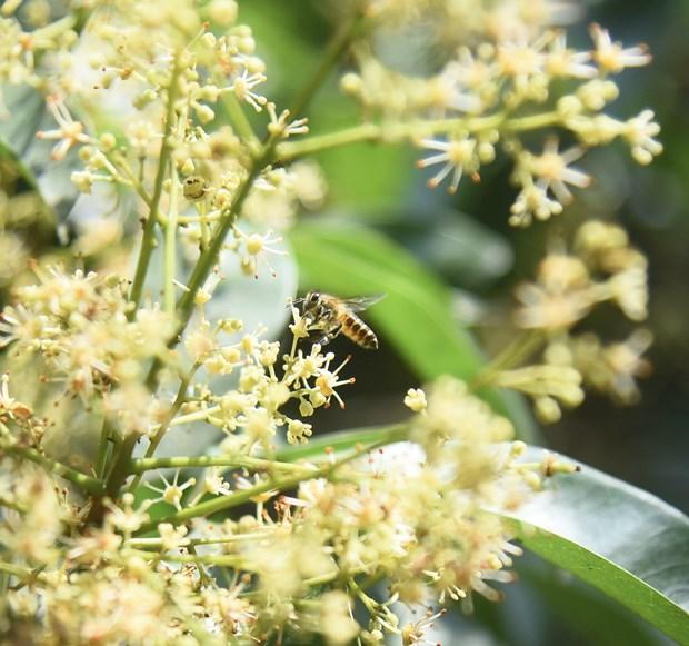 和平市独立乡注重发展养蜂业 hinh anh 2