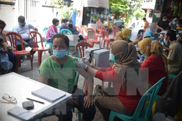 新冠肺炎疫情:印尼加大中国新冠疫苗进口力度 hinh anh 1