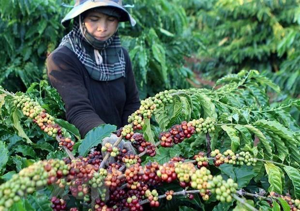 越南合作扩大农产品和食品出口市场 hinh anh 1