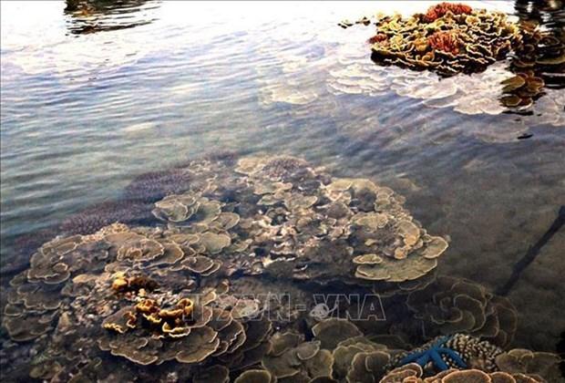 """越南旅游:独特的燕礁——""""地上水宫"""" hinh anh 1"""