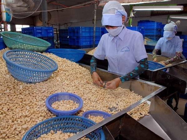 新冠肺炎疫情:腰果产业将出口目标下调至32亿美元 hinh anh 2