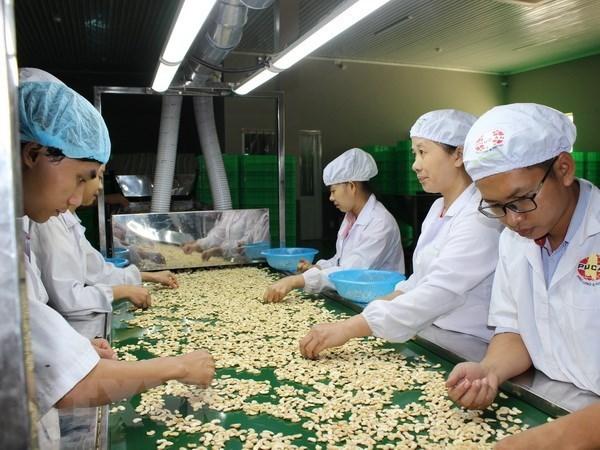 新冠肺炎疫情:腰果产业将出口目标下调至32亿美元 hinh anh 1