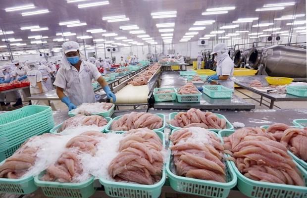 2020年越南查鱼出口额预计达15亿美元 hinh anh 2