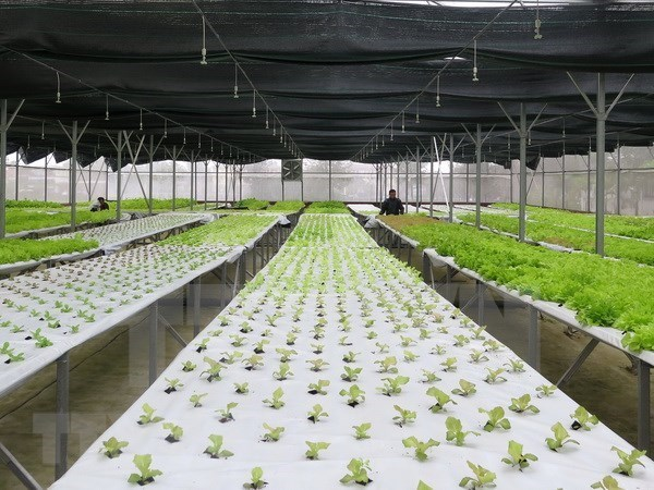 胡志明市力争至2030年发展成为全国优质农业中心 hinh anh 1