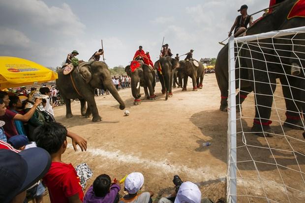 维护西原地区大象节的传统价值 hinh anh 1