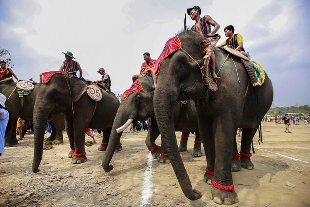 维护西原地区大象节的传统价值 hinh anh 2