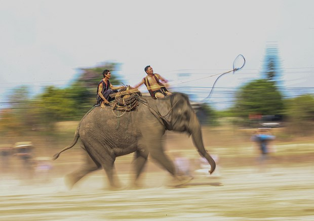 维护西原地区大象节的传统价值 hinh anh 3